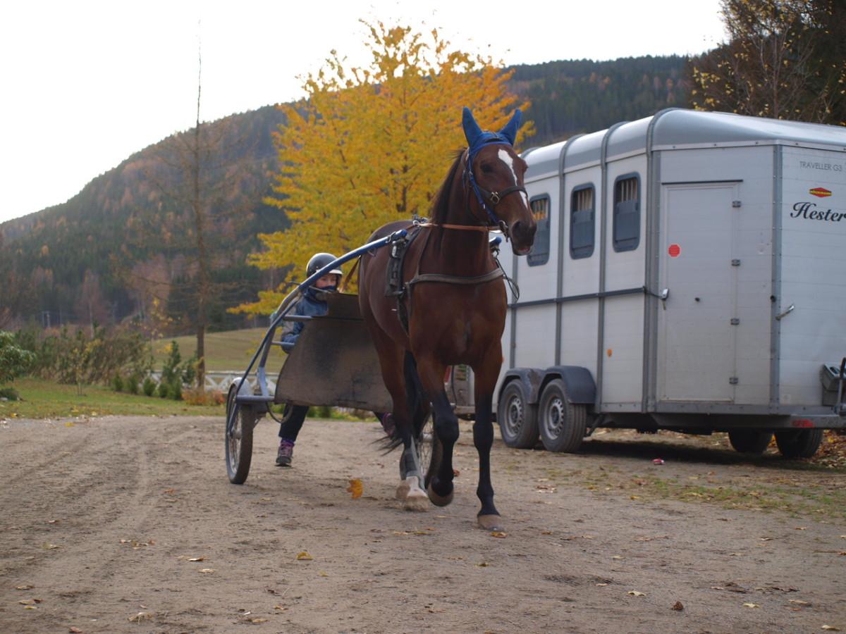 Jeg har ikke sett en hest kle en blå ørehette så godt som Oslo Kronos.
