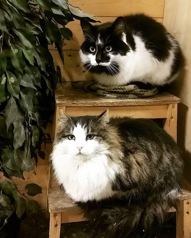 kattene