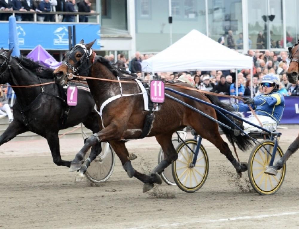 Jubeluke! Floris Baldwin Åby-seier, Laser Tile, Norse Ideal og Knight Classic også til topps!